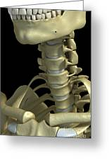 Bones Of The Neck Greeting Card