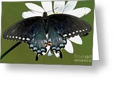 Eastern Black Swallowtail Greeting Card
