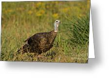 Eastern Wild Turkey Greeting Card by Linda Freshwaters Arndt