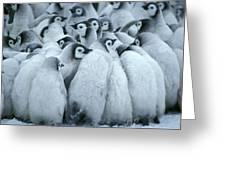 Emperor Penguin Aptenodytes Forsteri Greeting Card