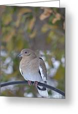 Female White Wing Dove Greeting Card