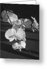 7 Flower Orchid Greeting Card