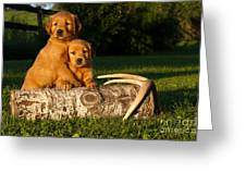 Golden Retriever Puppies Greeting Card