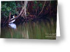 Great White Heron At Waters Edge Greeting Card