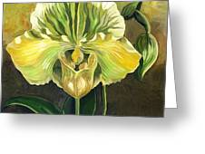 Ladyslipper Orchid Greeting Card