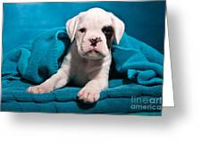 little Boxer dog puppy Greeting Card