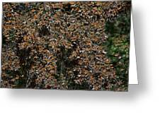 Monarch Butterflies Greeting Card