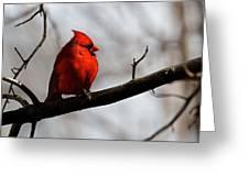Northern Cardinal Male Greeting Card