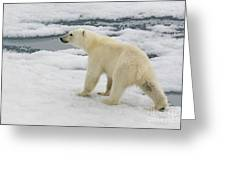 Polar Bear Crossing Ice Floe Greeting Card