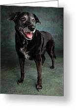 Portrait Of A Labrador Golden Mixed Dog Greeting Card