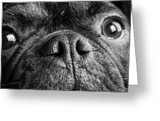 Portrait Of Pug Bulldog Mix Dog Greeting Card