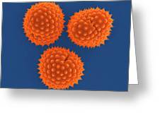 Ragweed Pollen (ambrosia Psilostachya) Greeting Card