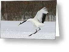 Red-crowned Cranes Greeting Card