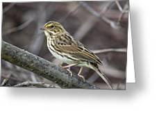 Savannah Sparrow Greeting Card