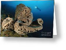 The Salvador Dali Sponge With Intricate Greeting Card