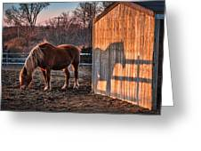 7056 Horse Shadow Greeting Card