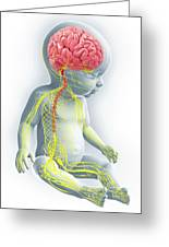 Baby's Nervous System Greeting Card