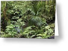 Jungle 5 Greeting Card