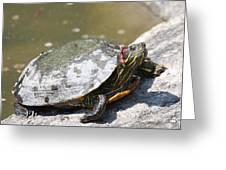 75 Year Old Turtle Moving On Greeting Card