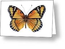 76 Viceroy Butterfly Greeting Card