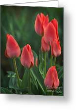 7reds Greeting Card