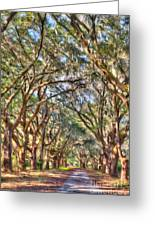 Plantation Allee Of Oaks Greeting Card