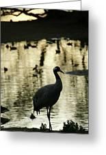Common Cranes At Gallocanta Lagoon Greeting Card
