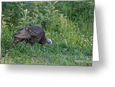 Eastern Wild Turkey Greeting Card by Linda Freshwaters Arndt