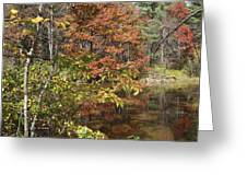 Fall In Upstate Ny Greeting Card