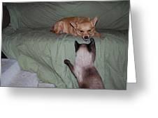 Foxy And Ninja Greeting Card