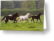 Horses On The Meadow Greeting Card
