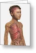Internal Anatomy Pre-adolescent Greeting Card