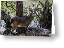 8 Point Buck In My Backyard Greeting Card