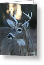 8 Point Buck With Sunset Greeting Card