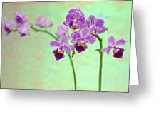 Purple Orchid-11 Greeting Card
