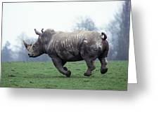 Rhinoceros Blanc Ceratotherium Simum Greeting Card