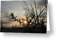 Sunshine On Raven Beach Greeting Card