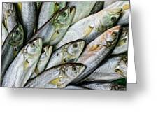 Tile Of Fishes Greeting Card