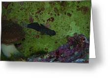 Tropical Fish And Coral Greeting Card