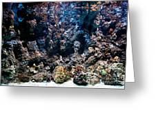 Underwater Life Greeting Card