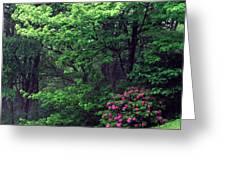 Usa, North Carolina, Pisgah National Greeting Card