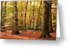 Vibrant Autumn Fall Forest Landscape Image Greeting Card