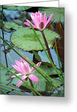 Pink Water Lily Pond Greeting Card