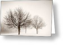 Winter Trees In Fog Greeting Card