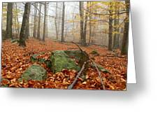 In The Autumn Forest Greeting Card
