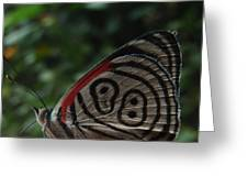 88 Butterfly Greeting Card