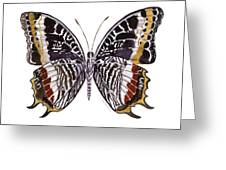 88 Castor Butterfly Greeting Card by Amy Kirkpatrick