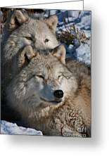 Arctic Wolves Greeting Card