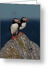 Atlantic Puffins Fratercula Arctica Greeting Card
