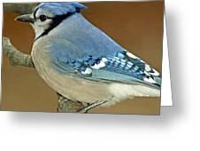 Blue Jay Animal Portrait Greeting Card